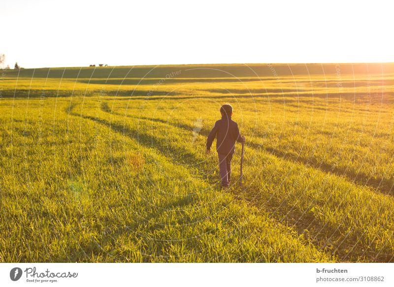 weiter gehen harmonisch Wohlgefühl Zufriedenheit ruhig Abenteuer Freiheit Kind Kindheit 1 Mensch Natur Landschaft Sonnenlicht Herbst Schönes Wetter Gras Wiese