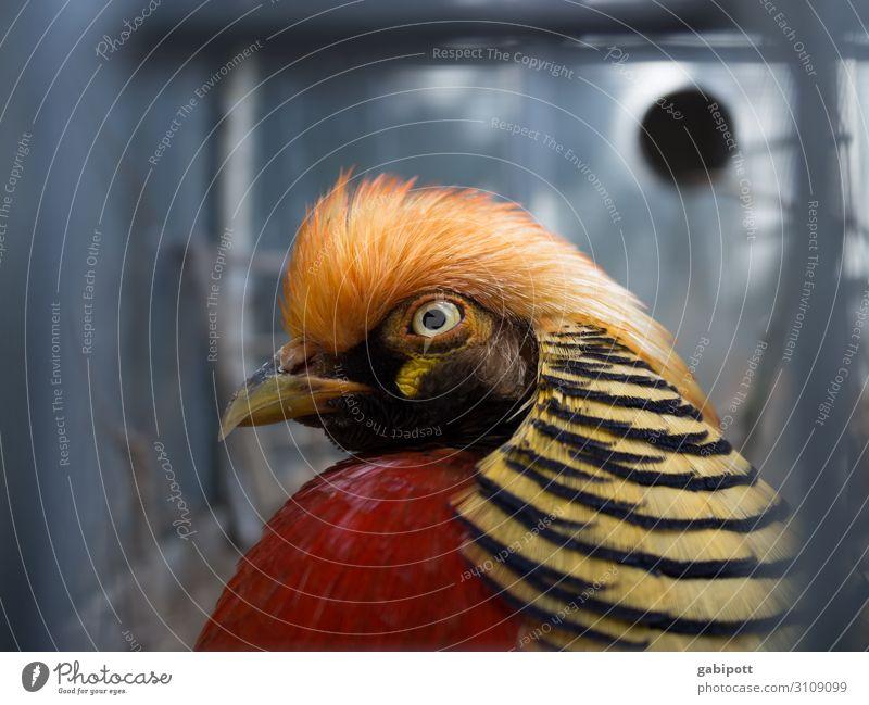 Ein Vogel namens Firle-Franz Natur Farbe schön Tier lustig Design Fröhlichkeit Kreativität Lebensfreude einzigartig exotisch bizarr