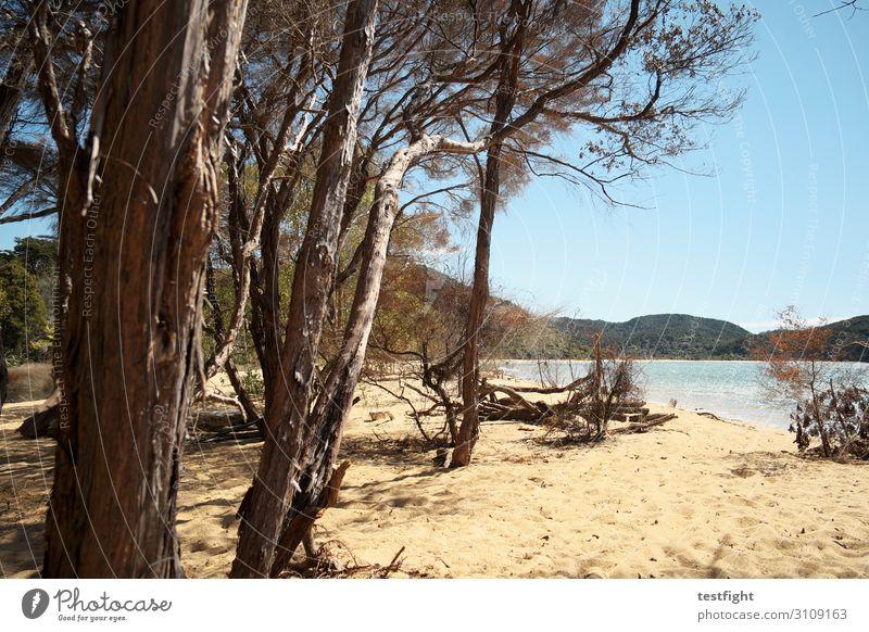 küste Umwelt Natur Landschaft Pflanze Urelemente Erde Sand Himmel Sommer Klima Schönes Wetter Baum Küste Meer Ferien & Urlaub & Reisen maritim Neuseeland