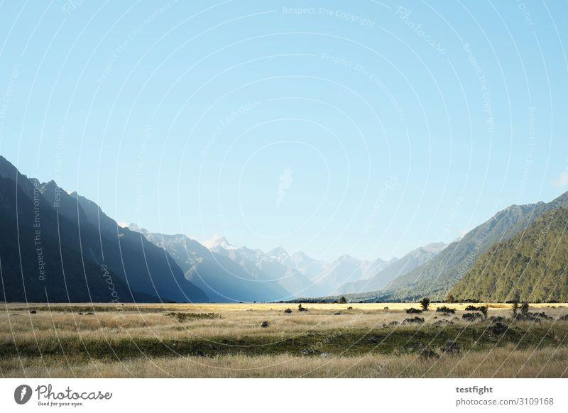 natur Umwelt Natur Landschaft Pflanze Erde Himmel Wolkenloser Himmel Sonne Sommer Schönes Wetter Sträucher Moos Berge u. Gebirge Gipfel Schneebedeckte Gipfel