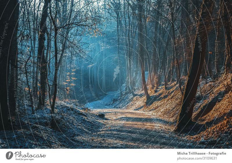Sonnenstrahlen auf dem Waldweg Natur Landschaft Pflanze Himmel Sonnenlicht Herbst Winter Schönes Wetter Baum Erholung leuchten wandern natürlich blau braun gelb