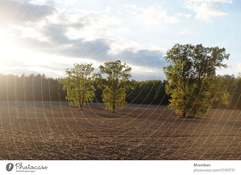 abgeerntet Umwelt Natur Himmel Sonnenlicht Sommer Herbst Schönes Wetter Feld Wald Zufriedenheit Einsamkeit Freiheit Freizeit & Hobby Unendlichkeit Feldrand