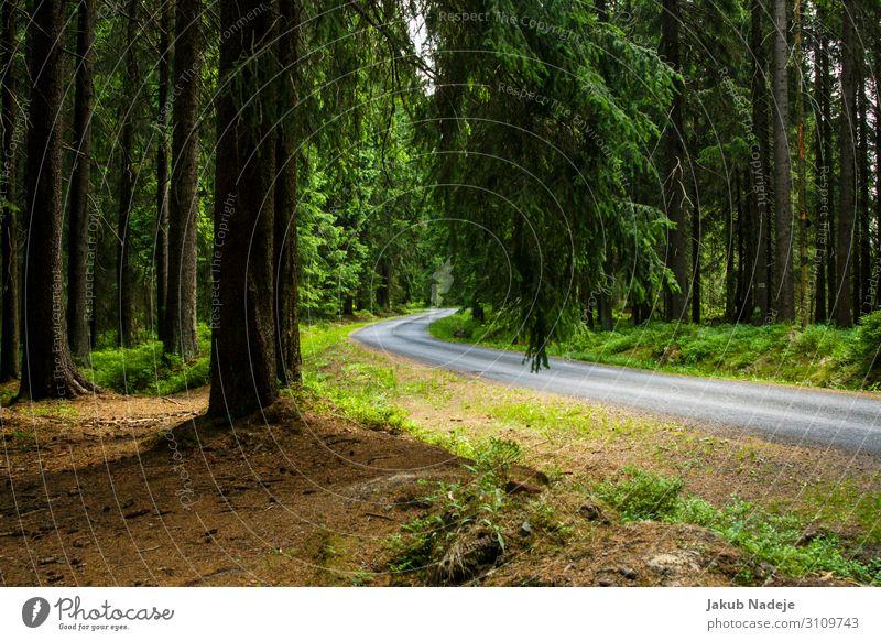 Straße durch den Wald Umwelt Natur Frühling Baum Holz beobachten wandern authentisch natürlich wild grün Zufriedenheit Abenteuer Erwartung geheimnisvoll ruhig