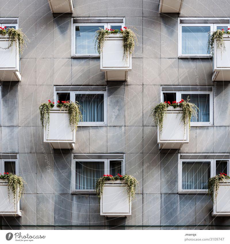 Wucher Häusliches Leben Wohnung Blume Fassade Balkon Fenster Ordnung Plattenbau Mietrecht trist Farbfoto Außenaufnahme Menschenleer Tag