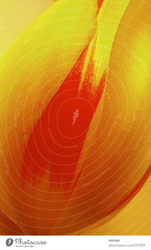 Orangy Blume gelb Farbe orange weich Wunsch Tulpe harmonisch