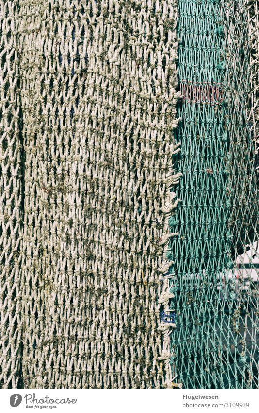 Netzwerken III Angeln Fischereiwirtschaft Kescher Gebiss fangen einfangen Einsatz Lebensmittel Meeresfrüchte Ernährung Gesunde Ernährung Speise Mittagessen