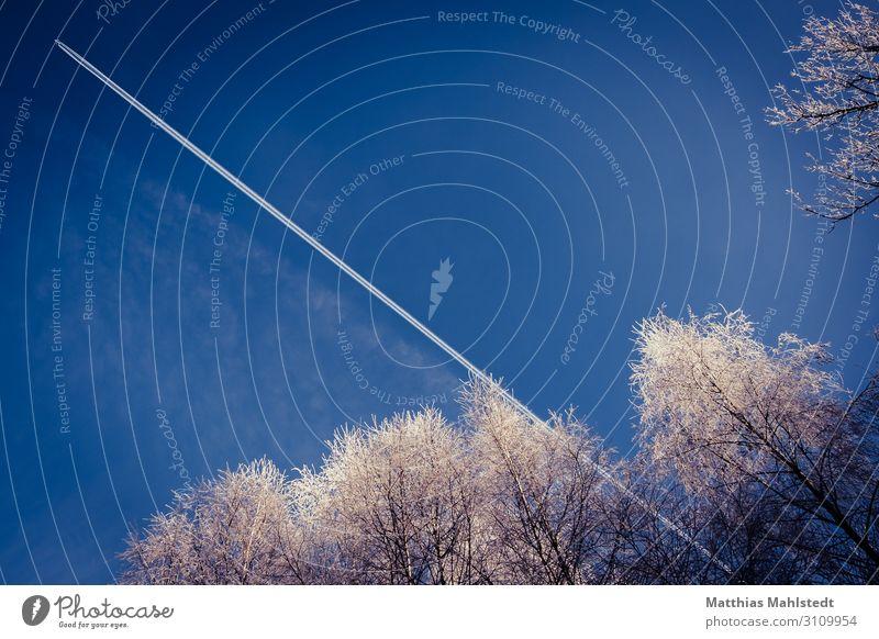 Kondensstreifen am blauen Himmel mit schneebedeckten Bäumen Umwelt Natur Wolkenloser Himmel Winter Klima Klimawandel Schnee Verkehr Verkehrsmittel Luftverkehr