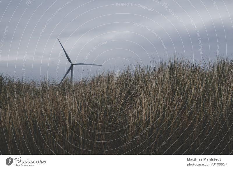 Windkraft Technik & Technologie Energiewirtschaft Erneuerbare Energie Windkraftanlage Umwelt Natur Landschaft Himmel Gras Küste Bewegung drehen nachhaltig
