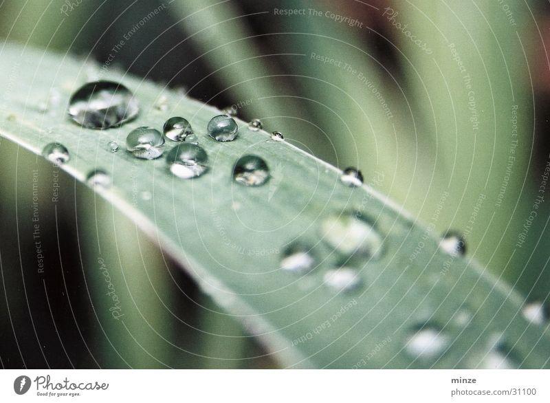 morgentau Pflanze grün Blatt glänzend Wachstum Wassertropfen Tau Reifezeit