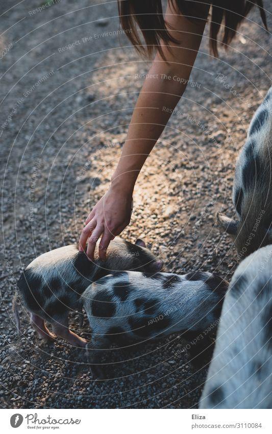 Rumferkeln Mensch Arme Hand Tier Haustier Nutztier Wildtier Zoo Streichelzoo Schwein Ferkel Tiergruppe Tierjunges Tierfamilie genießen streichen Zufriedenheit