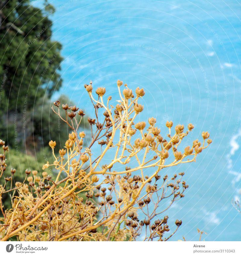 Irgendwas irgendwo Urelemente Wasser Sommer Schönes Wetter Gras Bucht Meer blau braun gelb türkis Ferien & Urlaub & Reisen Farbfoto Außenaufnahme Menschenleer