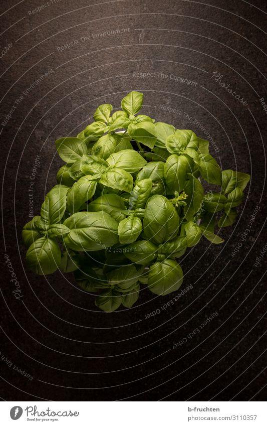 Basilikum Lebensmittel Kräuter & Gewürze Bioprodukte Vegetarische Ernährung Italienische Küche Gesunde Ernährung Pflanze Topfpflanze wählen genießen dunkel