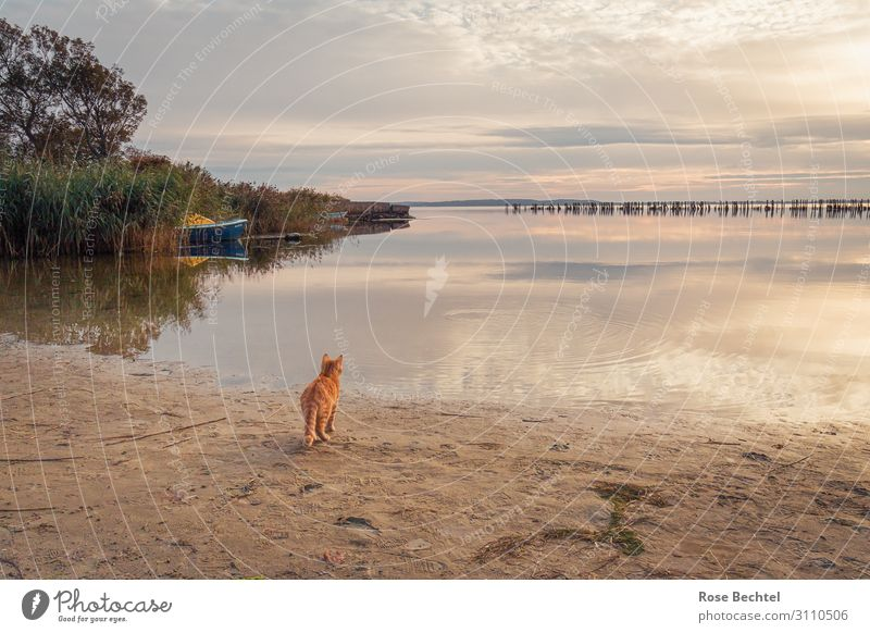 Sehnsucht Katze Ferien & Urlaub & Reisen Tier Einsamkeit Strand außergewöhnlich warten Hafen Haustier Wachsamkeit Surrealismus maritim friedlich Nutztier