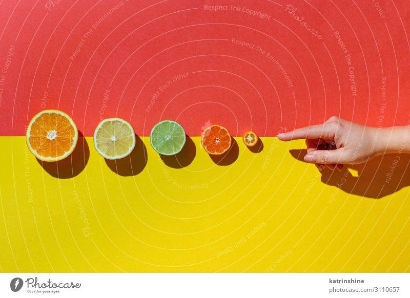Zitrusfrüchte auf korallenrotem Hintergrund Frucht Ernährung Vegetarische Ernährung Diät exotisch Sommer Hand Menschengruppe frisch modern natürlich saftig gelb