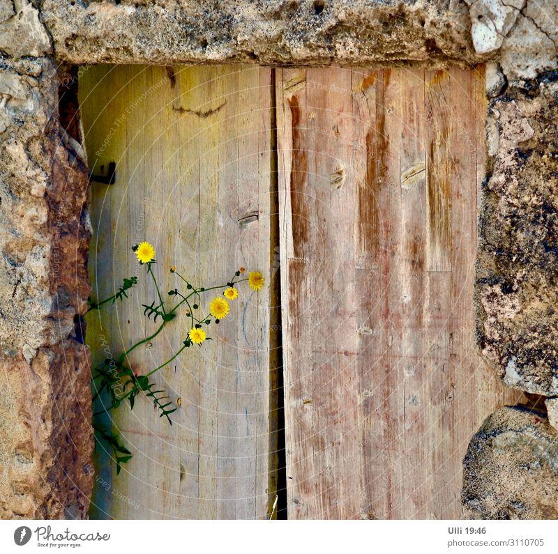 Lichtblick (1) alt Sommer Pflanze Einsamkeit Straße Holz gelb Wand Blüte Mauer Stein braun Häusliches Leben Ausflug Tür authentisch
