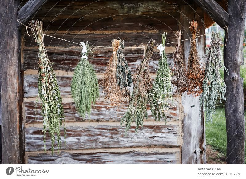 Kräuter welken im Freien. Kräuter & Gewürze Behandlung Alternativmedizin Medikament Landschaft Herbst Hütte alt authentisch natürlich grün Kräuterbuch