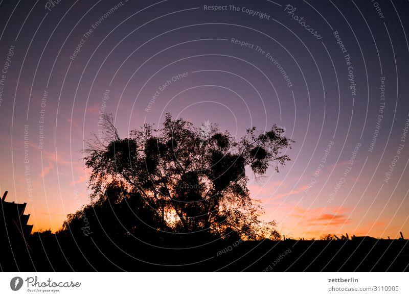 Dämmerung Abend Sonnenuntergang Himmel Himmel (Jenseits) Wolken dunkel Feierabend Farbe Farbenspiel Abenddämmerung Baum Ast Zweig Herbst Horizont Ferne Aussicht