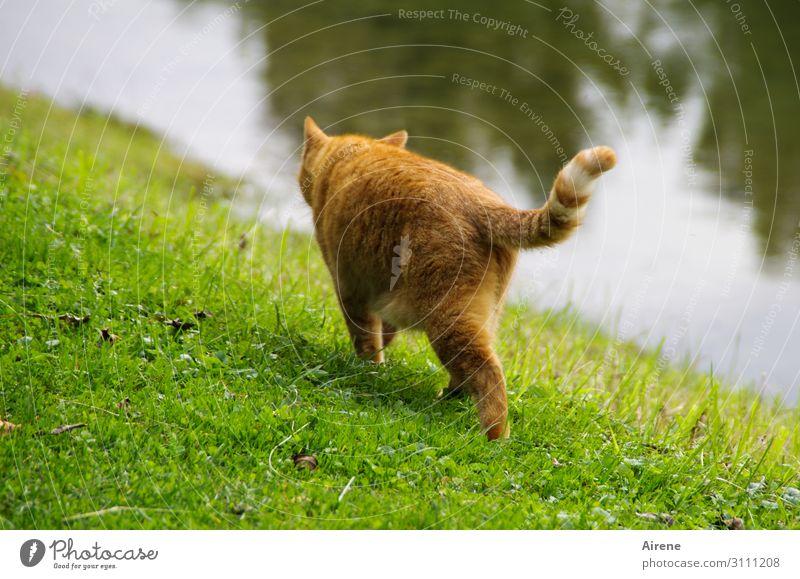 Ich schleich mich dann mal... Wiese Seeufer Flussufer Tier Haustier Katze 1 gehen Jagd schön grün orange Gelassenheit schleichen ruhig Wege & Pfade elegant