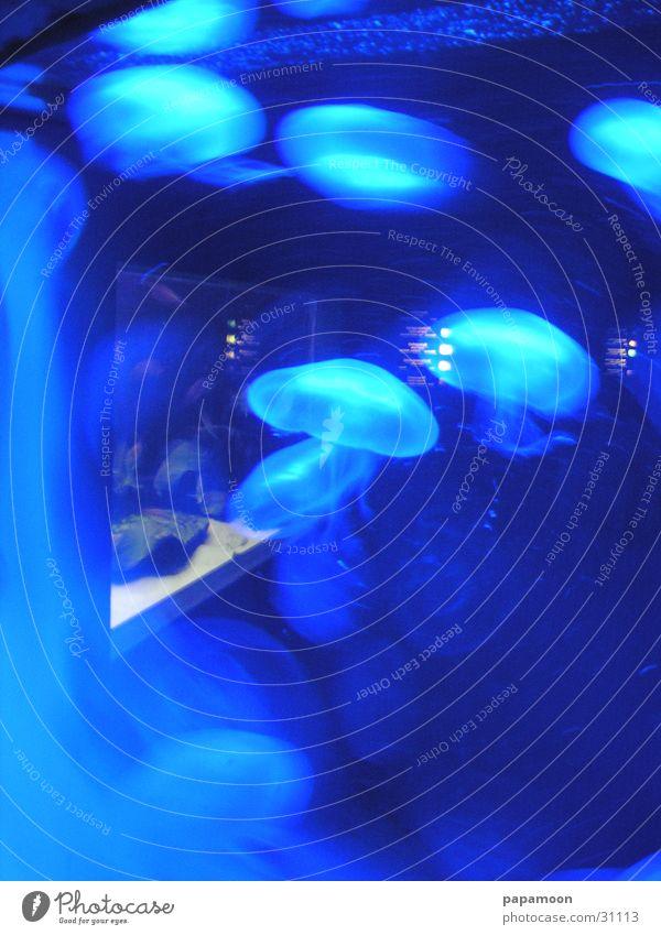 waterclouds Wasser blau ruhig Bewegung Aquarium Qualle