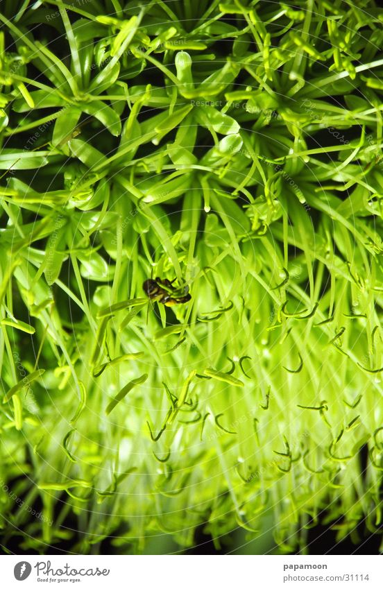 green field Blume grün Pflanze Blüte Verkehr Biene