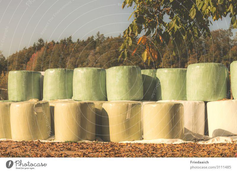 Strohballen Arbeit & Erwerbstätigkeit Landwirtschaft Natur Herbst Nutzpflanze Feld Tatkraft Tierliebe Fürsorge nachhaltig Farbfoto mehrfarbig Außenaufnahme Tag