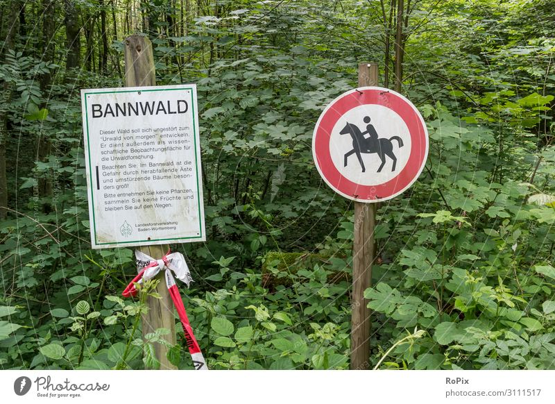 Bannwald Gesundheit Fitness Wellness Freizeit & Hobby Reiten Jagd Tourismus Ausflug Sport Sport-Training Reitsport Arbeit & Erwerbstätigkeit Landwirtschaft