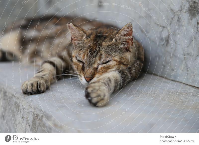 schlafende Katze Lifestyle Freude Ferien & Urlaub & Reisen Tourismus Ausflug Sommer Strand Natur Garten Tier Haustier Tiergesicht 1 schön braun Gefühle Stimmung