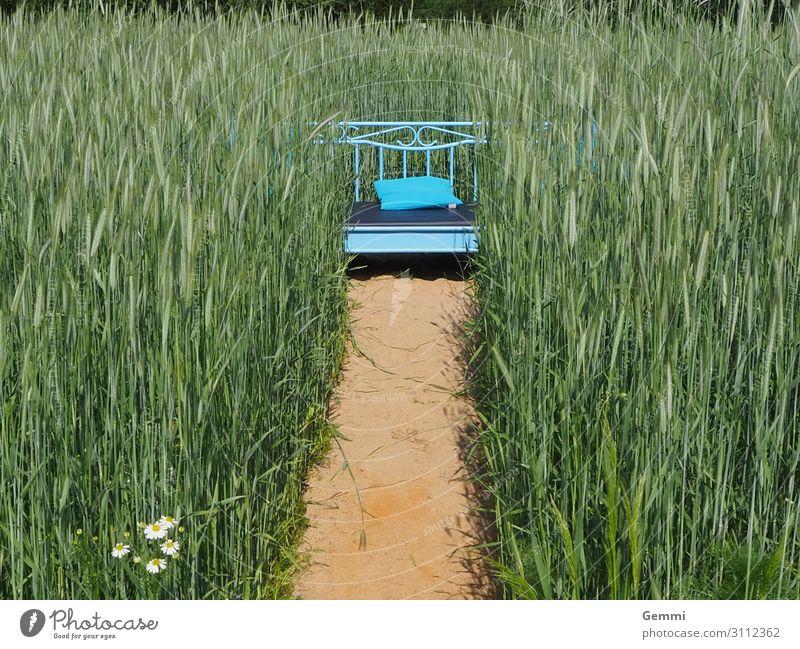 Schlaf gut! Glück Wohlgefühl Ausflug Sommer Garten Bett Natur Pflanze Sand Sonne Schönes Wetter Nutzpflanze Getreidefeld Park Feld Erholung genießen liegen