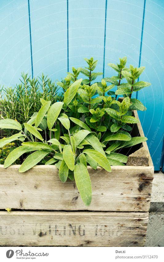 Kräuterkiste Pflanze blau grün Gesundheit Lebensmittel Ernährung frisch lecker Kräuter & Gewürze Bioprodukte Zutaten Holzwand Nutzpflanze Minze Rosmarin Salbei