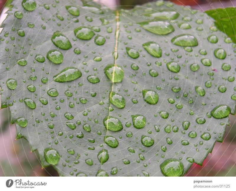 raindrops Wasser grün Blatt Regen Wassertropfen nass feucht Linse vergrößert