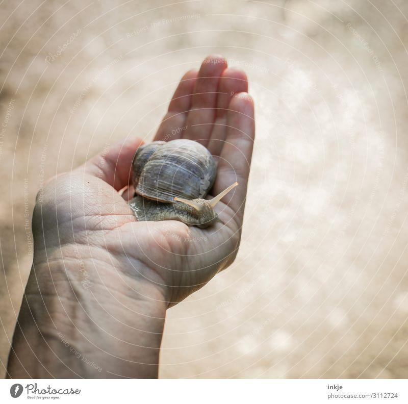 Artenvielfalt | wertvoll Hand Wildtier Schnecke Weinbergschnecken 1 Tier festhalten authentisch nah natürlich braun Tierliebe friedlich Schutz Handfläche