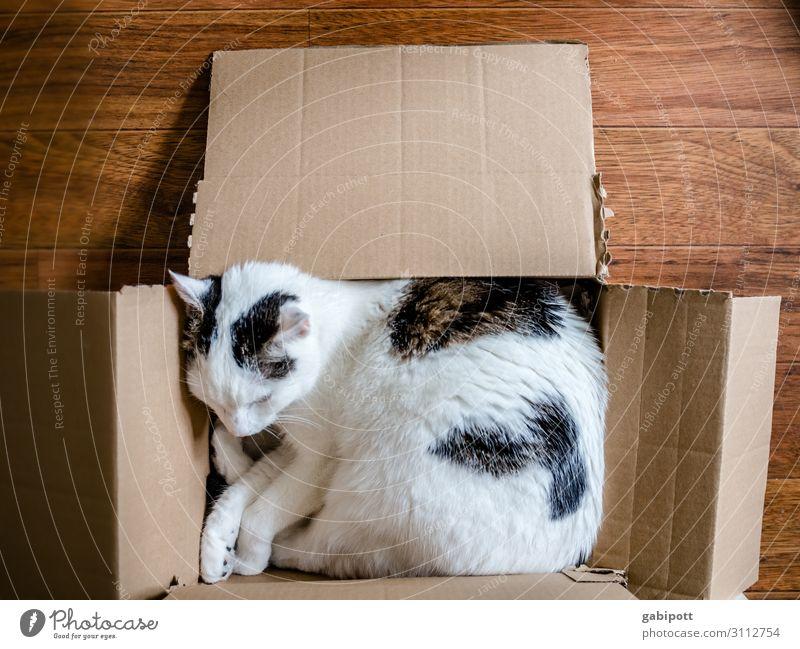 Kistenschläfer Katze Erholung Tier schlafen Haustier gemütlich Karton kuschlig typisch