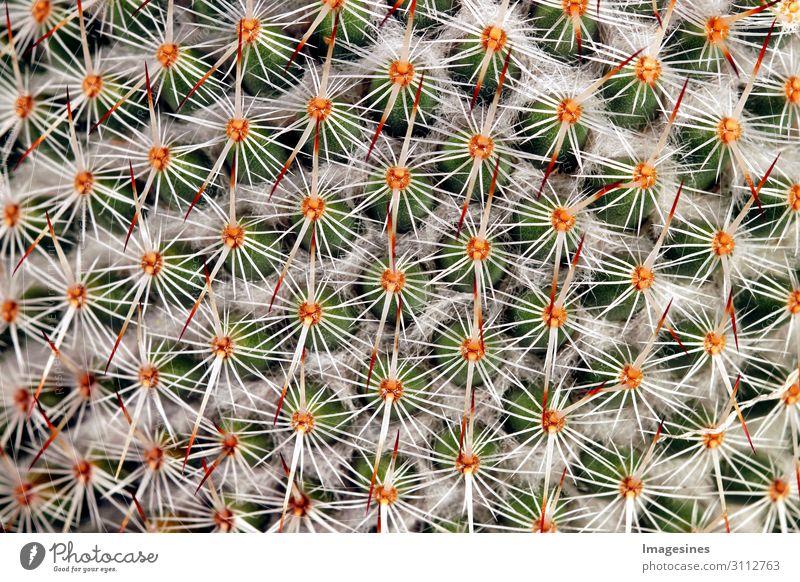 """Kaktus - Und es sticht sticht sticht Natur Pflanze exotisch stachelig mehrfarbig Schmerz """"Dornen kateen Nahaufnahme Hintergrund Vollbild dorn dornig abstrakt"""