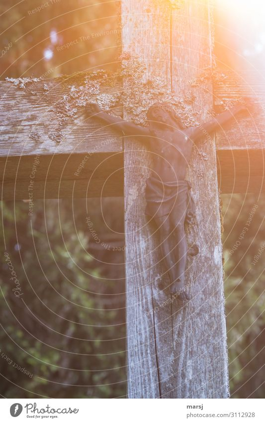 Allerheiligen Feste & Feiern Ostern Karfreitag Mensch 1 Holz Kreuz Kruzifix Kraft Hoffnung Glaube Traurigkeit Tod Schmerz Einsamkeit kreuzigen Todesstrafe