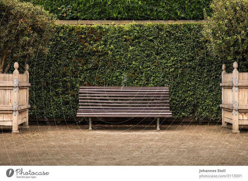 alt Pflanze Stadt grün Baum Erholung Einsamkeit Blatt Holz natürlich Garten braun Sand Park Kirche liegen