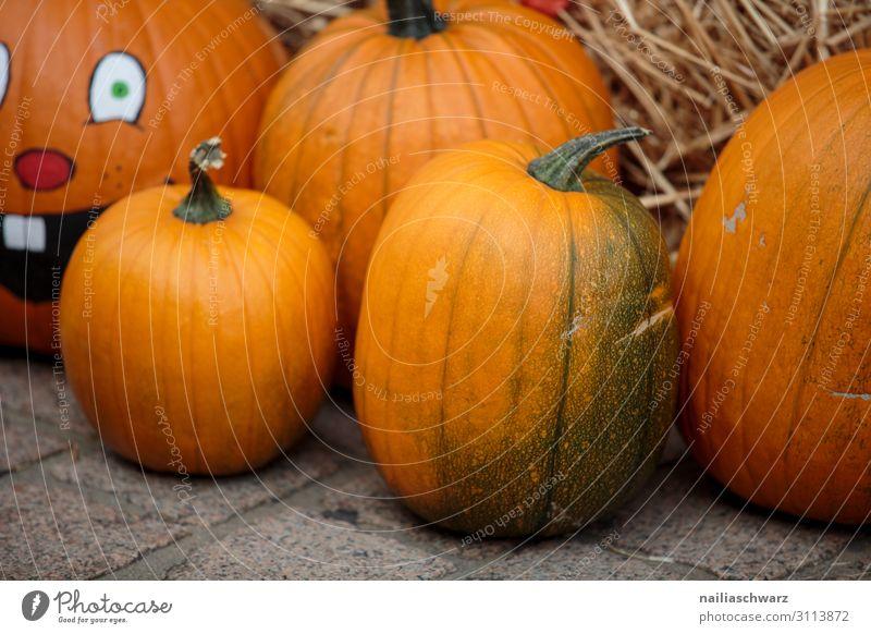 Kürbisse auf dem Markt Lebensmittel Gemüse Ernährung Bioprodukte Vegetarische Ernährung Lifestyle kaufen Feste & Feiern Erntedankfest Halloween Gartenarbeit