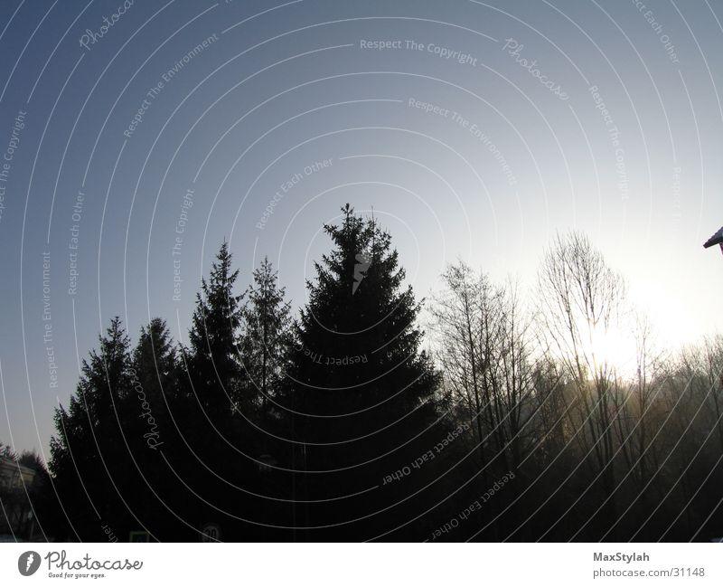 nachtwippfel Natur Himmel Baum Sonne ruhig 7 Verlauf Nachmittag