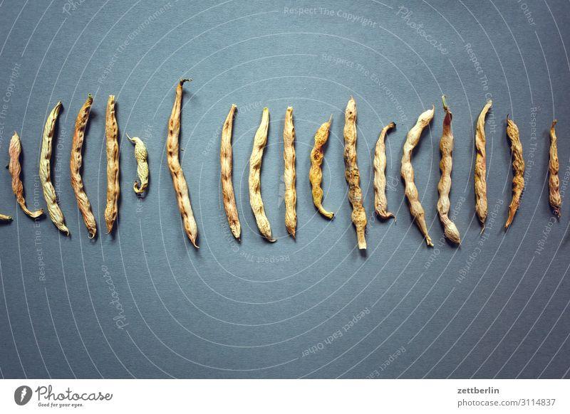 Bohnen Erbsen Ernte Ernährung Gesunde Ernährung Speise Essen Frucht Garten Hülsenfrüchte Essen zubereiten Lebensmittel trocken Vegane Ernährung