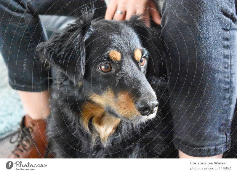 Hund sitzt bei einer jungen sitzenden Frau Haustier Junge Frau Jugendliche schauen treuer Blick Tier braun schwarz Tiergesicht Blick zur Seite