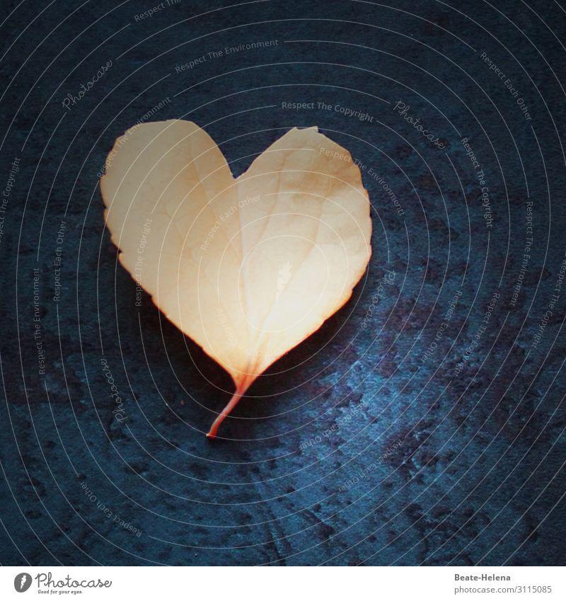 Natural Love Stil Glück Valentinstag Pflanze Baum Blatt herzförmig Herz Zeichen Ornament wählen gebrauchen Bewegung glänzend Kommunizieren leuchten Liebe