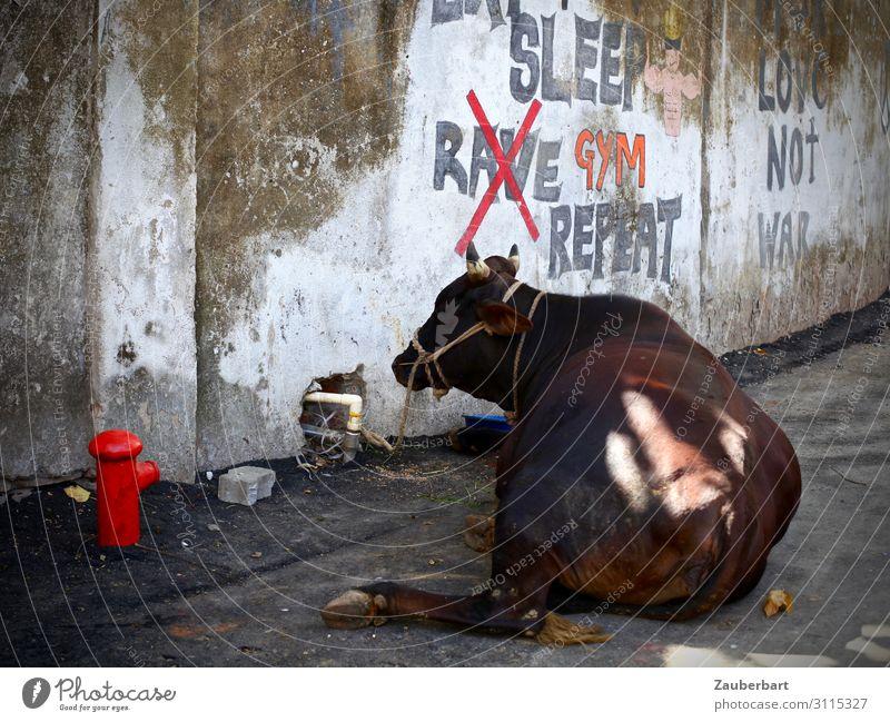 Sleep Rave Repeat exotisch Städtereise Subkultur Graffiti Mauer Wand Tier Kuh 1 Wärme braun grau rot Vertrauen Tierliebe friedlich Gelassenheit geduldig ruhig