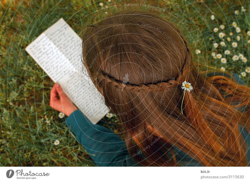 Draufsicht aus Vogelperspektive auf fröhliches, glückliches, hübsches Mädchen mit langen braunen Haaren, schöner, geflochtener Frisur, Blume im Haar, liegt auf Wiese mit Gänseblümchen in der Natur und liest einen Liebesbrief, Brief, handgeschrieben.