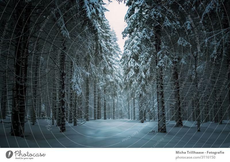 Winterwald in Thüringen Ferien & Urlaub & Reisen Tourismus Schnee Winterurlaub wandern Wintersport Natur Landschaft Pflanze Himmel Sonnenlicht Eis Frost Baum