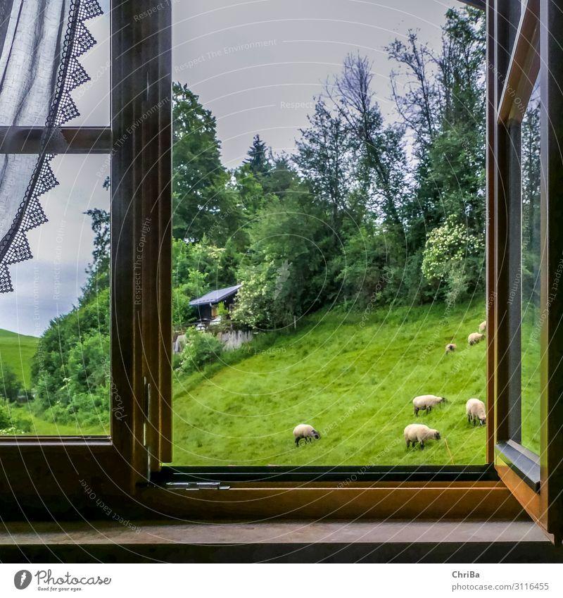 Ausblick im Allgäu Ferien & Urlaub & Reisen Sommer grün Erholung Tier Fenster Berge u. Gebirge Glück Tourismus Freiheit Häusliches Leben wandern Aussicht