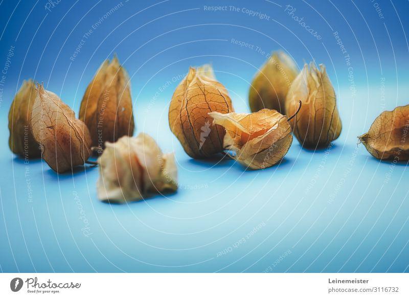 Physalis Lebensmittel Frucht Beeren Ernährung Bioprodukte Vegetarische Ernährung Diät blau Kartoffelschale Hülle lecker Süßwaren Farbfoto Innenaufnahme