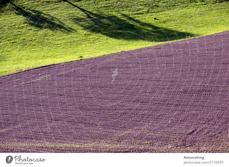 Schattenspiele Umwelt Natur Landschaft Pflanze Sommer Wetter Schönes Wetter Wärme Baum Gras Wiese Feld Hügel braun grün ruhig Linie Landwirtschaft Ackerbau