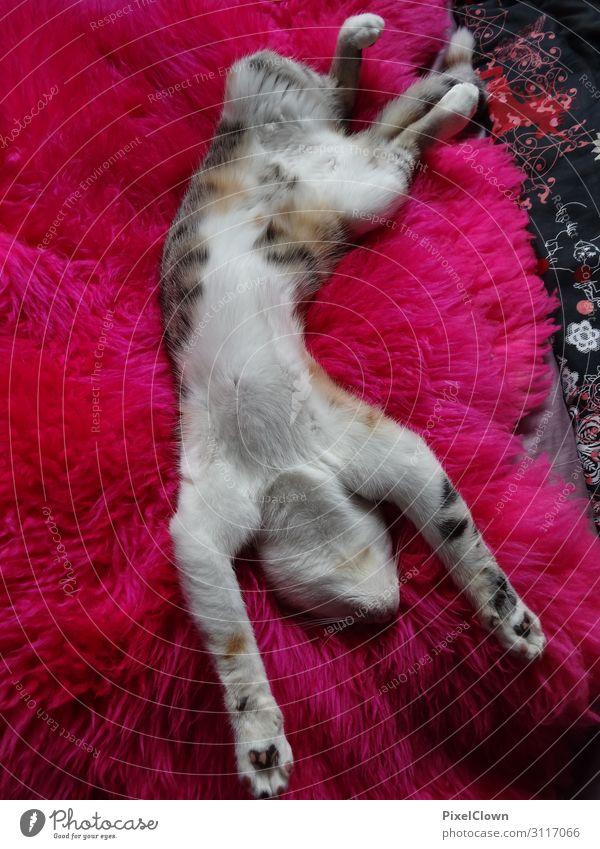schlafende Katze schön rot Tier Lifestyle rosa Stimmung Häusliches Leben verrückt Haustier