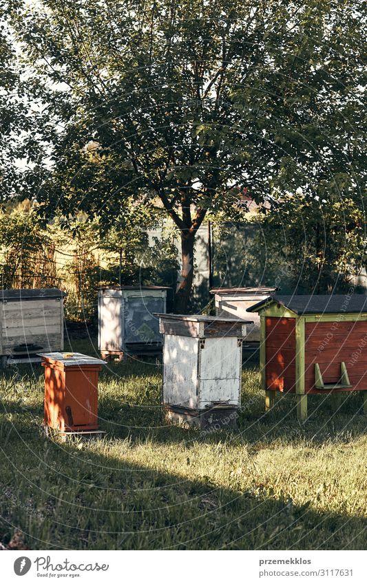 Bienenstand mit einigen Bienenstöcken in einem Obstgarten Sommer Natur Tier authentisch natürlich Liebling Bienenzucht Imkerei Honigbiene Bienenkorb Ackerbau