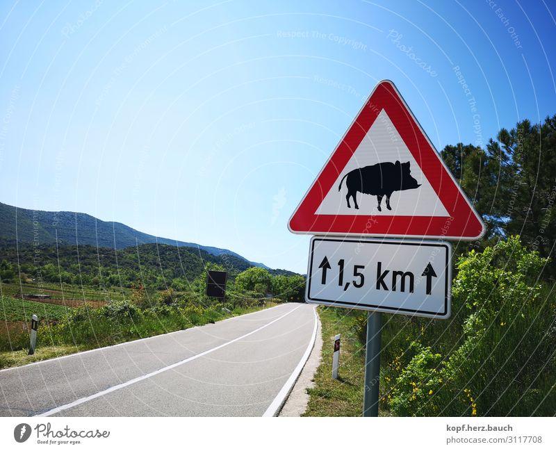 Hilde, die Wilde Koratien Verkehr Straße Verkehrszeichen Verkehrsschild Wildtier Wildschwein 1 Tier blau grün rot Bewegung bedrohlich Idylle Tourismus