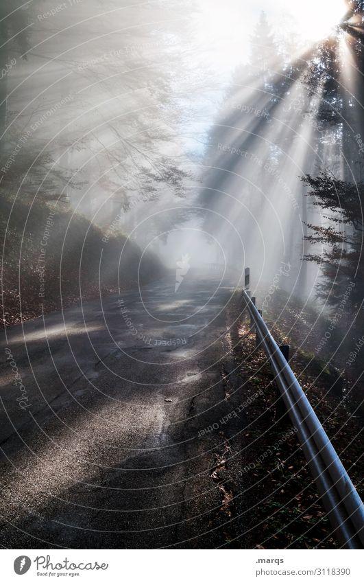 Im dichten Fichtendickicht Ausflug Natur Urelemente Herbst Schönes Wetter Nebel Wald Verkehrswege Straße Leitplanke fahren leuchten Stimmung Sicherheit